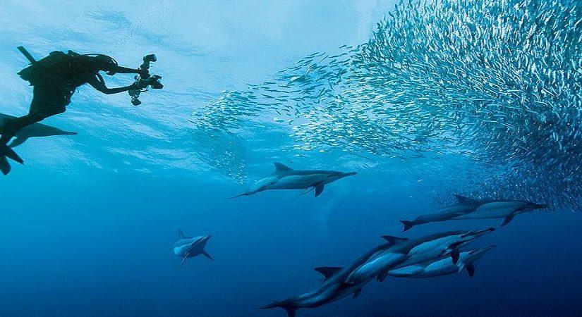 Plongée sous-marine : la garantie des montées d'adrénaline