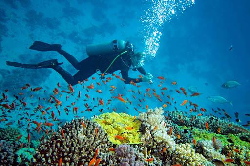 Plongée sous marine : quel matériel pour commencer ?